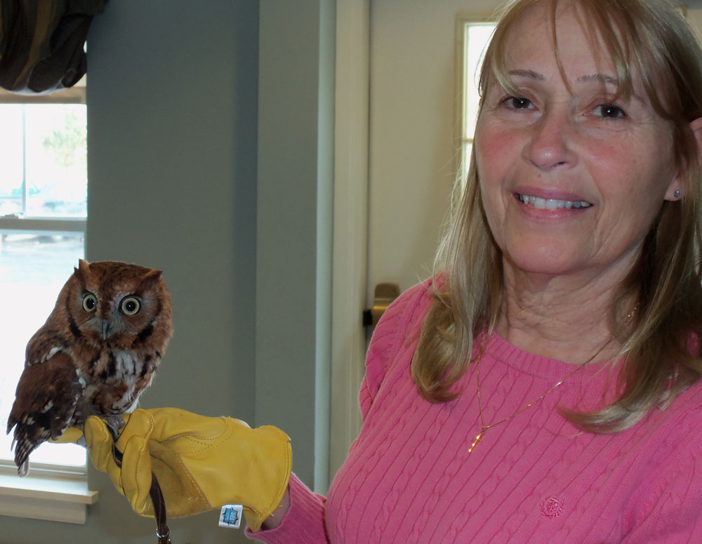 Volunteer Nancy Foote with an Eastern screech owl.