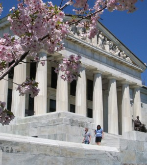 No, this is not Washington, DC - it's Delaware Park in Buffalo!  Cherry trees bloom in the Japanese Garden outside the Buffalo History Museum. The statue on the steps is President Abraham Lincoln.