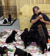 Marlene Smith gives love to Dena's 13 puppies, born after Dena was rescued from a high-kill shelter in Ohio. Dena and her puppies have all been adopted and going to their homes October 17. Photo by Dianne Hickerson.