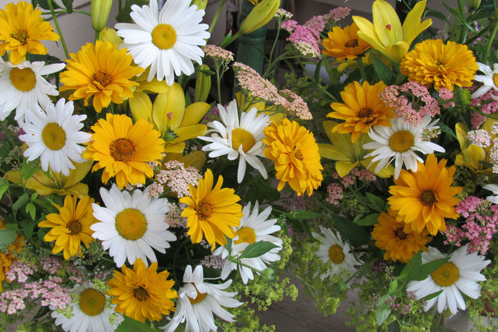 Daisies make excellent cut flowers. Here they add a casual, meadow feel to a mixed bouquet. The soft stems of daisies can be woven together to create a flower chain. K. Gabalski photo