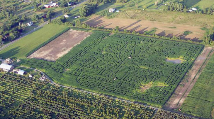 This year, Zarpentine Farm celebrates the 15th anniversary of its frequently traveled corn maze. The maze sits across 20 acres with seven miles of walking trails.