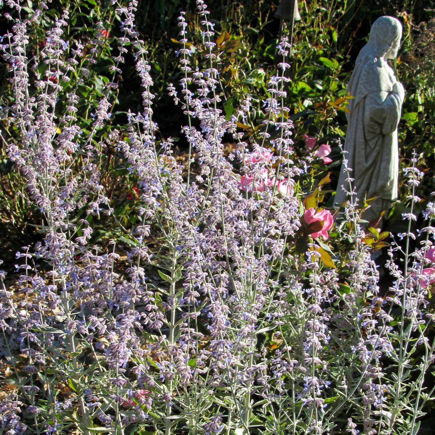 Transplanting Perennials And Shrubs Westside News