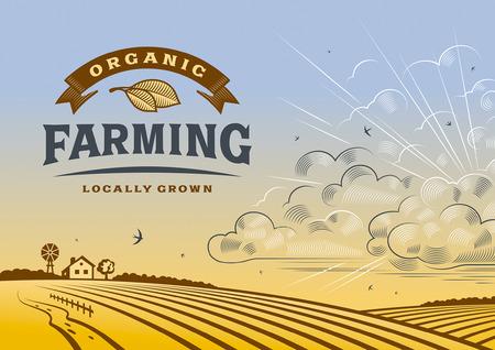 42489497 - organic farming landscape