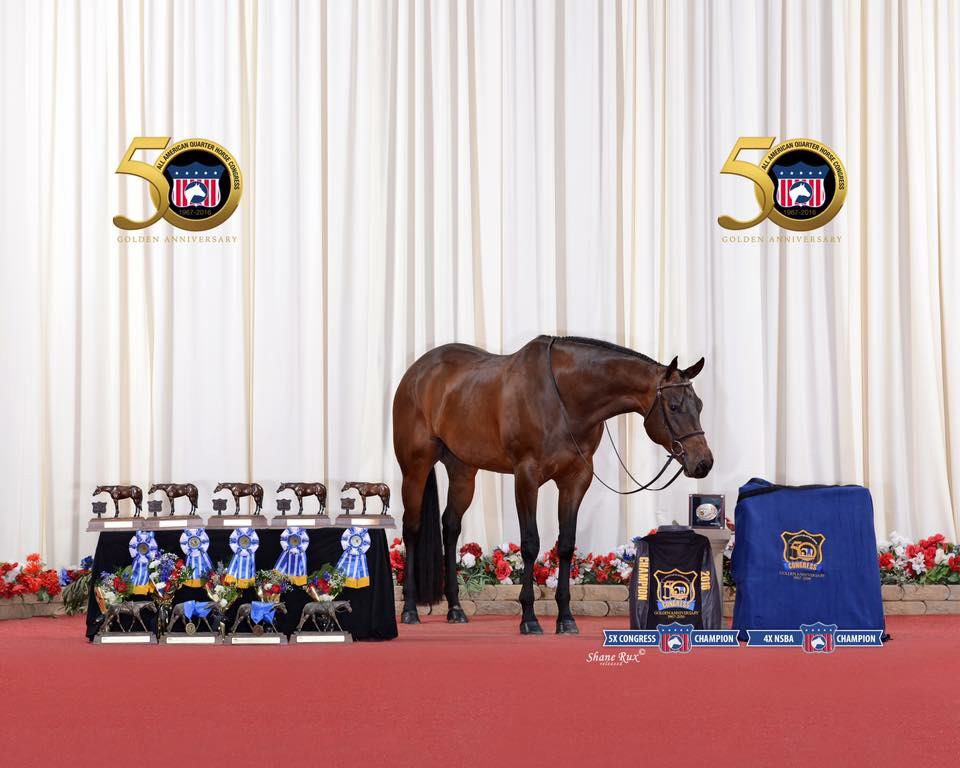 Horton stands proudly with his awards won at The All American Quarter Horse Congress. Provided photo