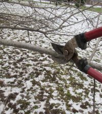 Bare branches and dormant shrubs and trees mean now is a great time for garden pruning chores.
