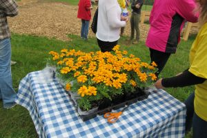 Those attending the opening of the Holley Community Garden were invited to take home a marigold as a natural way to deter garden pests. The Holley Community Garden is organic. K. Gabalski photo