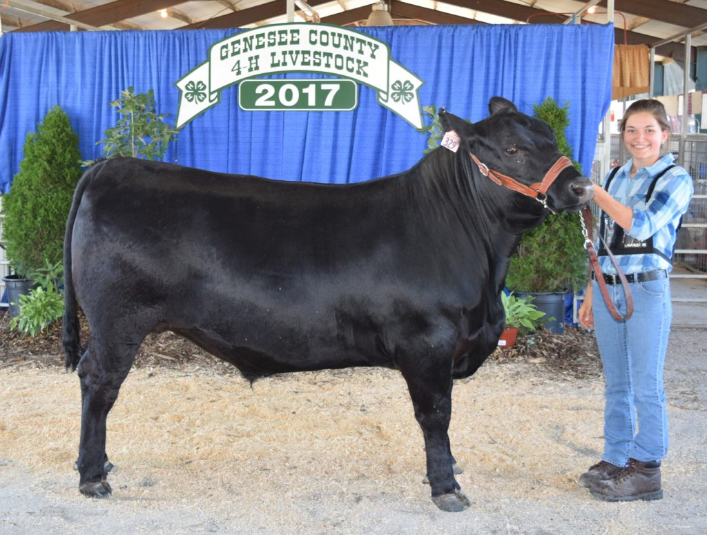 Morgan Hofheins with her Champion Market Steer.