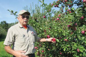 John Burch of Burch Farms in Hilton stands in his Empire Apple orchard on Route 259 in Hilton. The Empires have slight nicks in their skins from a June hail storm. K. Gabalski photo