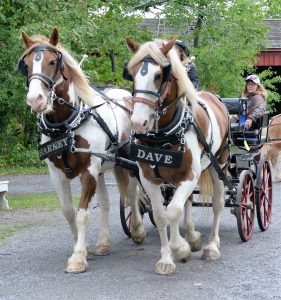 Horses, like Barney and Dave, are just some of the many animals to be found at Genesee Country Village & Museum's Fall Festival & Agricultural Fair September 30 and October 1. Provided photo