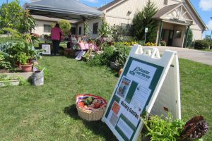Orleans County Master Gardener volunteers staffed the Victory Garden site on Saturday, September 9, as part of the 2017 Orleans County Heritage Festival. K. Gabalski photo