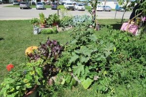 View of the Victory Garden at Orleans County Cornell Cooperative Extension. K. Gabalski photo