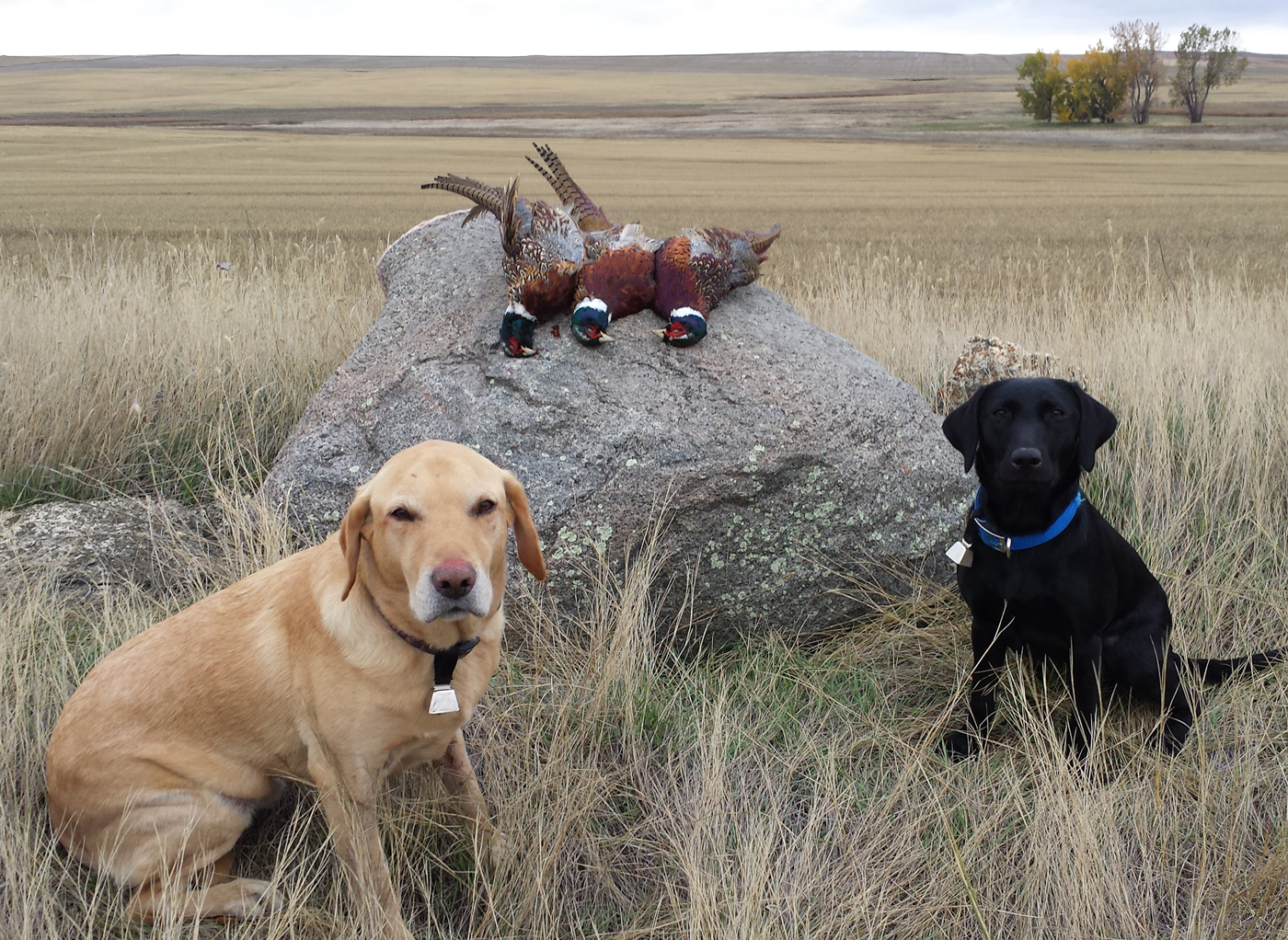 Cove and Genny with a limit of wild Montana pheasants. Provided photo