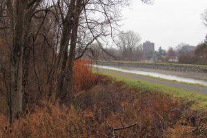 Looking southeast along the Erie Canal near the Redman Road bridge where vegetation management work will take place. K. Gabalski photo