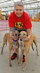 "Gail Gufstafson of East Irondequoit brought her greyhounds to the Meet and Greet at the Garden Factory on Buffalo Road on October 21. Quinlyn (left) just turned four years old. Leo is about to turn three. ""Once I got my first one about 17 years ago, that was it,"" she said. ""I fell in love with them and have been adopting ever since."" Photo by Dianne Hickerson"