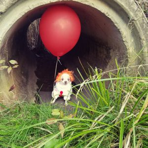 Wisky in costume as Pennywise. Provided photos