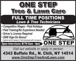 One Step Tree 2x2 Employment-FT 2018