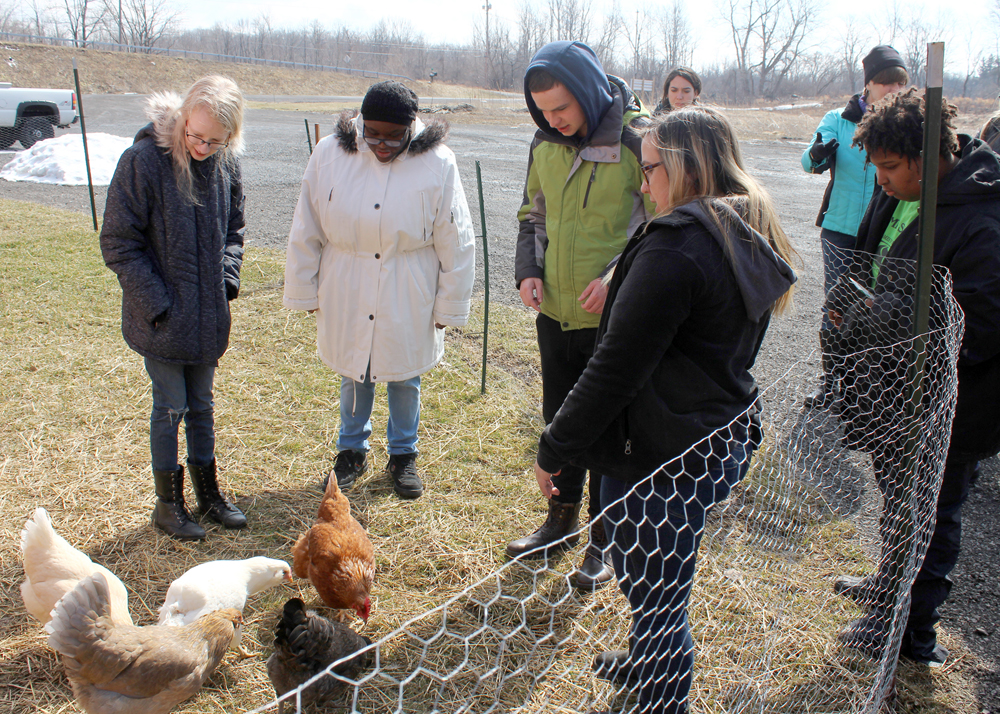 The animal-loving students had the chance to meet a few of the chickens, including three named for the Spice Girls.