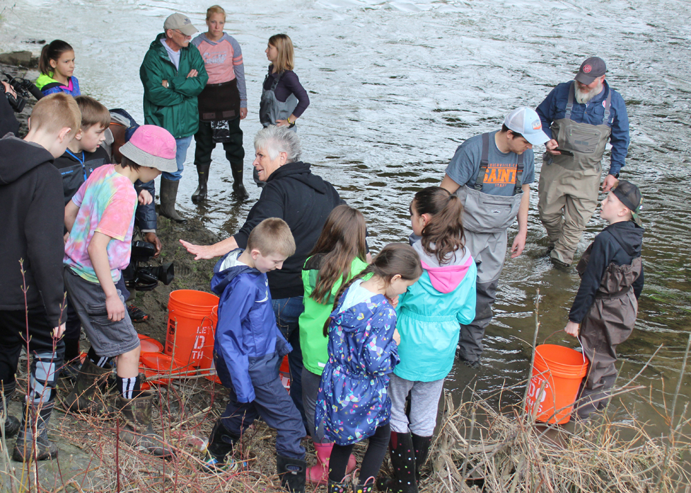 Churchville-Chili students and teachers braved the muddy banks of Oatka Creek to assist in the release of their carefully nurtured trout fingerlings.