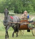 The carriage driving competition will be held June 23 at  Northampton Park.