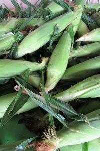 Corn 3318