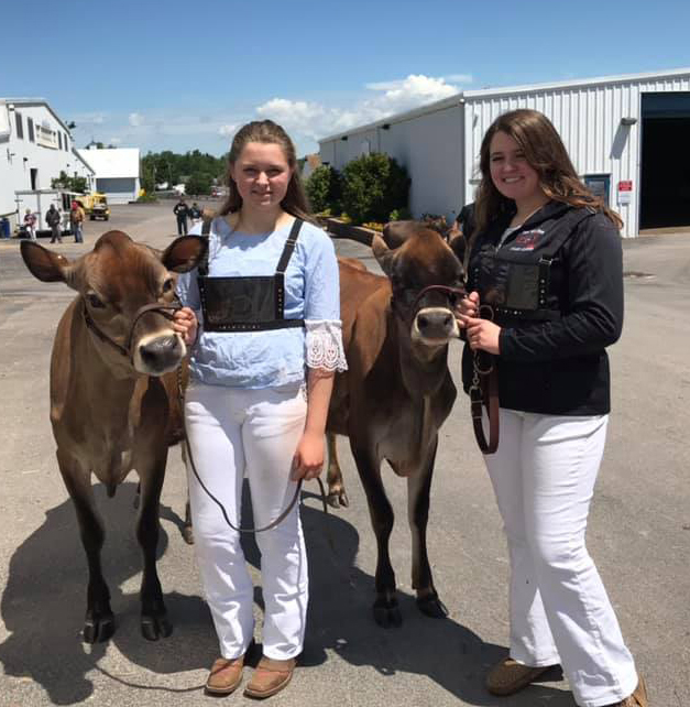 Faith and Hope Avedisian in Erie County with their heifers. Photo by Brenda Avedisian