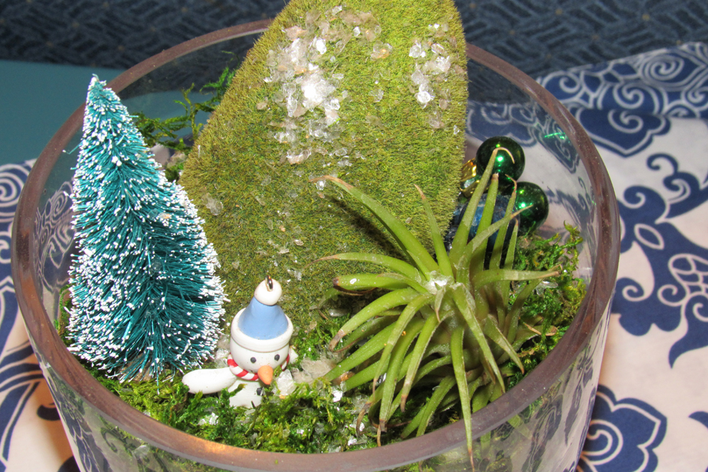 This super simple seasonal dish garden features moss, an air plant and embellishments. The air plant can be removed for weekly watering and embellishments can be changed according to the season. Photo by Kristina Gabalski