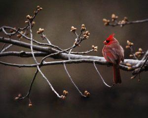 Sam Cardinal