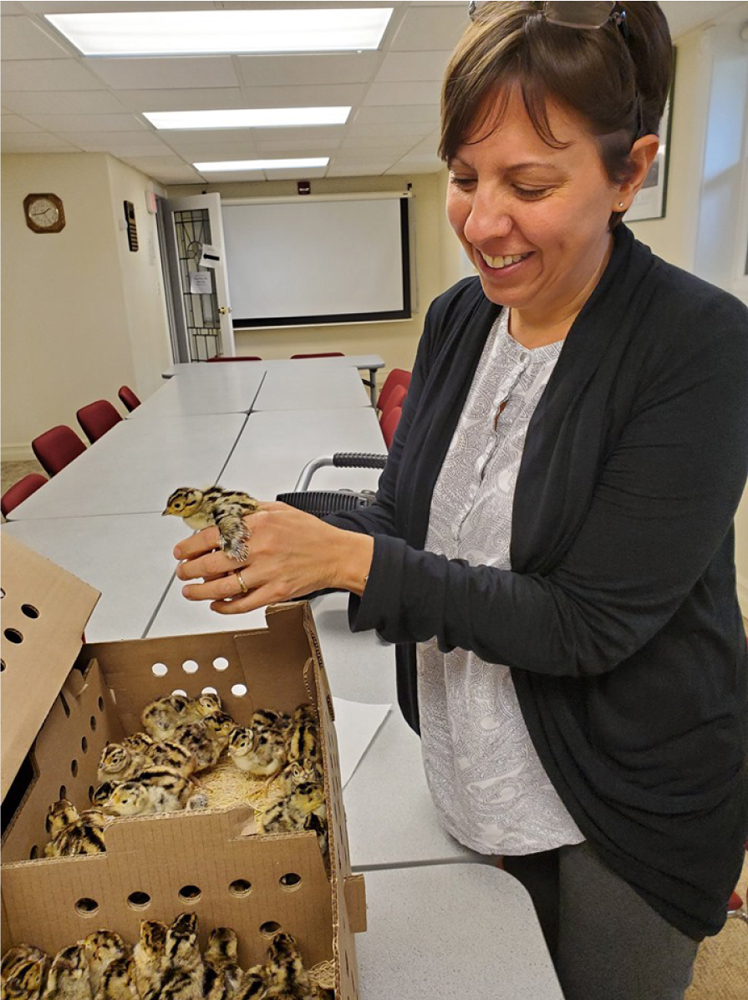 CCE-Monroe Executive Director Andrea Lista with pheasant chicks in May 2019. Photo by Susan Coyle