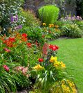 Green lawn in a colorful landscape formal garden.